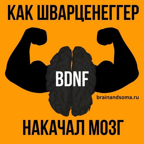 BDNF Шварценеггер