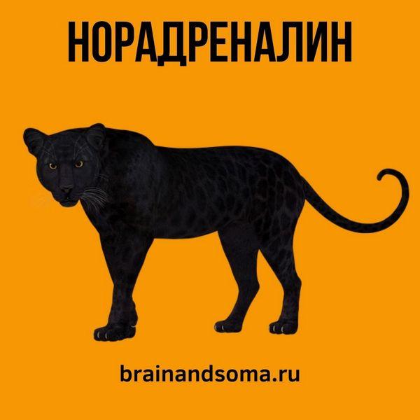 норадреналин гормон хищников