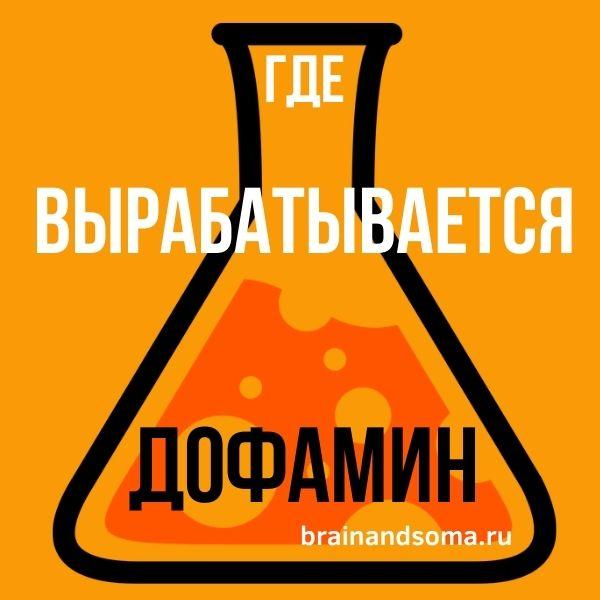 дофамин где вырабатывается